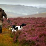 A Quick Look at the British Gamebird Industry