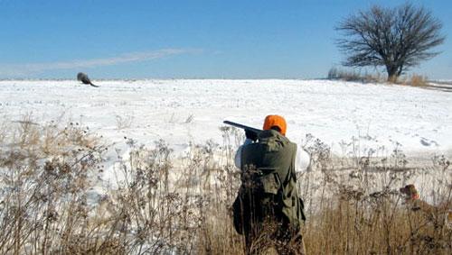 Kansas Crowing About Its Pheasants : Serious Bird Hunting!