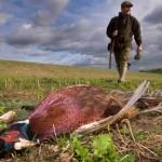 Sleeper Pheasant States