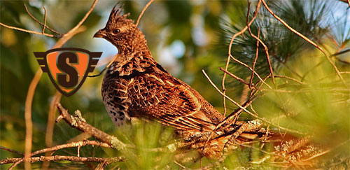 2011 Compiled Ruffed Grouse Forecast