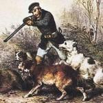 Wolf Attacks Bird Dog in WI