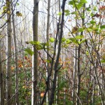 SBH Hunt Report: Grouse in Maine