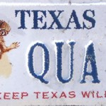TX Quail Better But Not Great