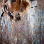 Q&A About SportDOG's New GPS System