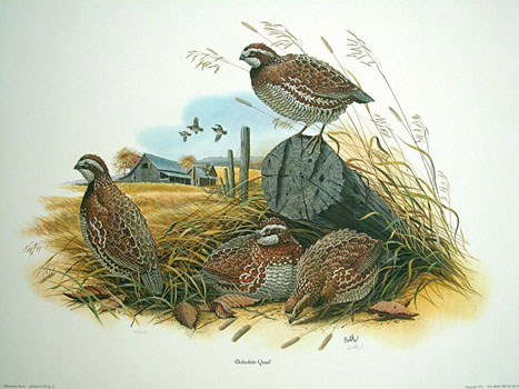 Photo balkegallery com   Quail Painting