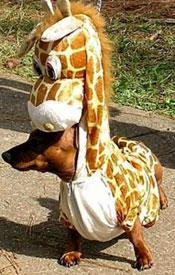 dachsund_giraffe