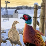 Iowa Tackling Pheasant Decline