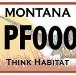 Re-Hatch: MT Pheasants Decent!