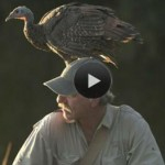 Best Bird Film Ever: 'My Life As a Turkey'