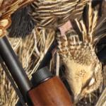 One of dan's prairie chix (Dan Craven photo).