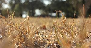 TX_grass_drought_TexasWaterResourcesInstitute