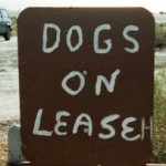 Would You Lease a Gun Dog?