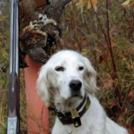 MN Wants Your Grouse Comments