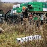 Pheasant Stocking Won't Help Iowa